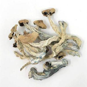 Amazonian mushroom